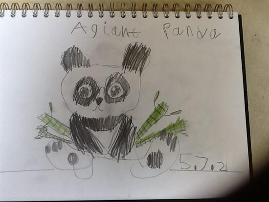 Panda3 (7)